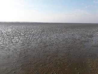 ferienwohnung büsum wattenmeer nordsee
