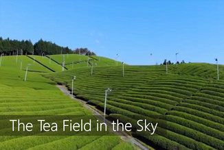 japanese green tea & tea farms