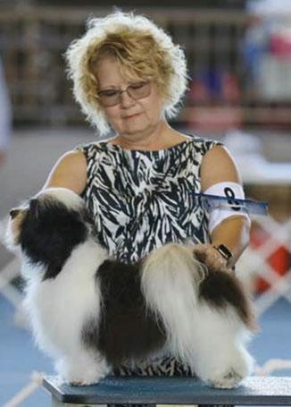 犬種ハバニーズ ドッグショーチャンピオン犬 ハバニーズ専門ブリーダー ブリリアントハバニーズ