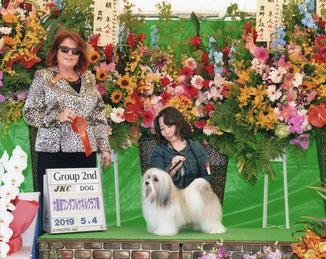 犬種ハバニーズ 2019/5/4ドッグショーチャンピオン ハバニーズ専門ブリーダー ブリリアントハバニーズ
