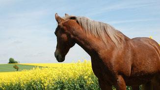 wild und frei leben mit Pferden