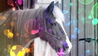 Tod meines geliebten Pferdes