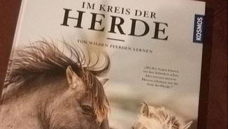 sich wieder wild und frei fühlen Dank Pferden