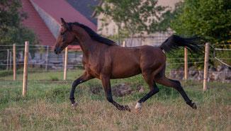 Pferde machen glücklich