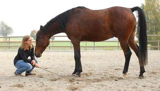 Wenn Pferdefrauen es zu gut meinen, das Pferd verhätscheln
