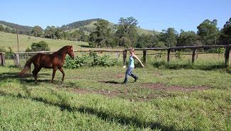 Pferde durch innere Stärke führen