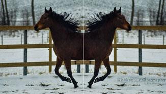 Pferde spiegeln den Menschen