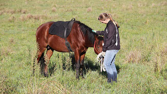 Natural Horsemanship Definition