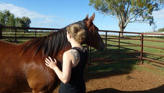 Vermenschlichung beim Pferd