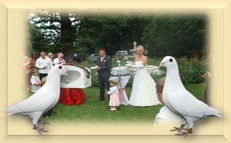 Weiße Hochzeitstauben beim Schautauben Züchter Rüdiger Kranz aus Osterburg.