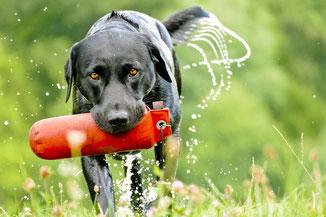 Hundetrainer Social Walks