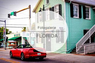 Fotogalerie, Bilder, Florida