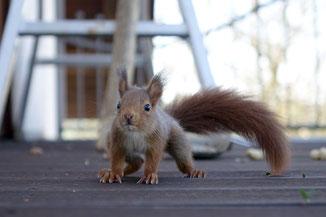 Das Eichhörnchen im Stadtwappen