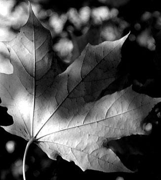 осінь , осіння пісня