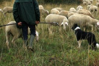 Fil laine mérinos
