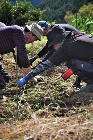 自然栽培 農業体験 体験農場 野菜作り教室 タマネギ