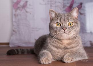 Franziska Spohn Fotografie - Tiershooting, Indoorshooting, Katzenfoto