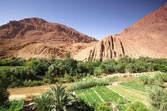 Wüstentrekking Marokko-Reise