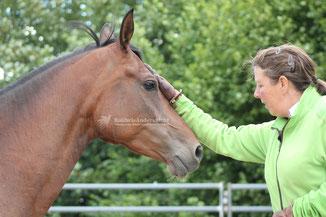 Trainerausbildung, Horsemanship, Im Sinne des Pferdes