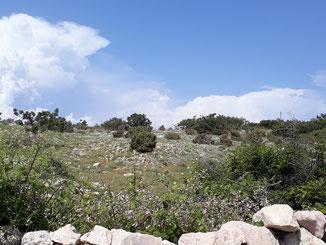 Karge Landschaft - auf der schwäbischen Alb wären wenigsten Schafe zu sehen...
