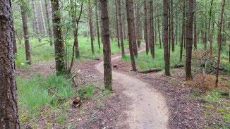 Ich biege ab in einen flowigen Trail...