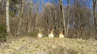 ...und plötzlich tauchen 3 Osterhasen auf...