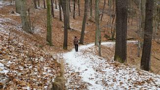 Herrliche Wanderwege durchziehen die Wälder...