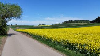 Ist das nicht wunderschön... die gelben Rapsfelder...