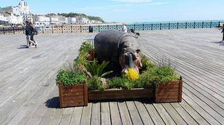 Auch Flußpferde fühlen sich auf dem Pier sauwohl...