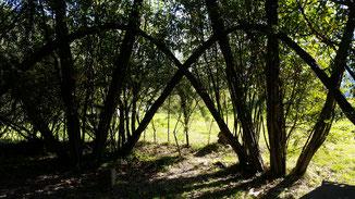 Hast du schon mal nen Hängebrückenbaum gesehen? Er wächst von Erde zu Erde...