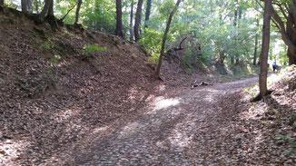 Ein steiler Waldweg führt nach oben...