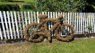 Vor Jahren hat ein Radler sein Bike am Zaun abgestellt...