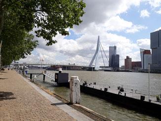 Die Pfeiler der Erasmus-Brücke sind höher als die Hochhäuser...
