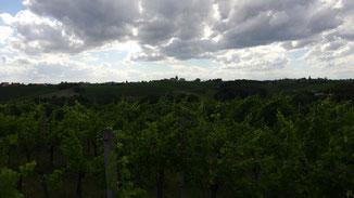 Grüne Hügellandschaft zwischen Drau und Mur...