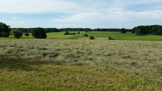 Der Duft nach frisch getrocknetem Gras vermittelt Urlaubsgefühle