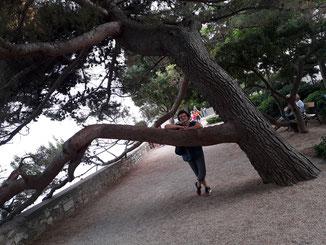 Au - der Baum wird wohl gleich umfallen...
