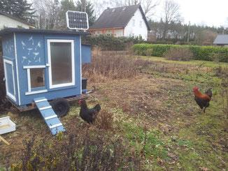 Wie bei allen Stallungen wurde 12V Solarsystem für Hühnerklappen- und Lichtsteuerung eingebaut.