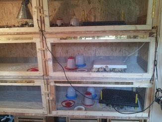 Die Aufzucht der Küken erfolgt in Kükenheimen aus OSB-Platten.