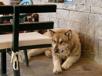 Hofhund Hector passt auf