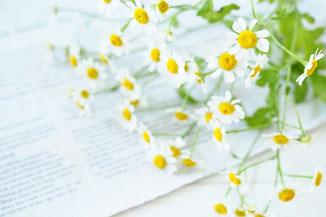 ハードカバーの本のうえに置かれた眼鏡。コーヒーの入った白のマグカップ。アイビーの葉っぱのつる。
