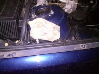 Marder im Auto deponiert seine Beute