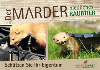 Marder Mader Marder im Auto Gras Raubtier