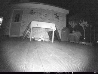 Marder Katzenfutter Terrasse