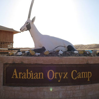 Arabian Oryx Camp, Oman