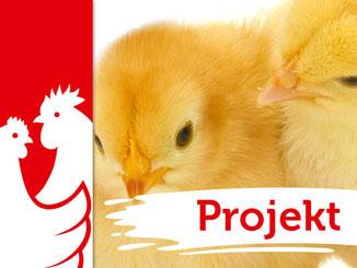Huhn und Hahn Projekte