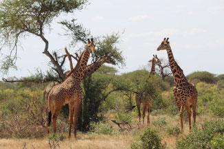 Afrika- Kenia