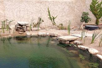 Paisaje y jardín de una biopiscina