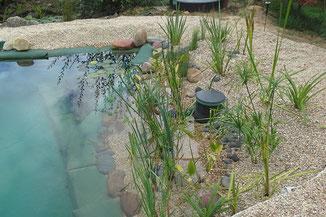 Plantas para depuración de piscina ecológica