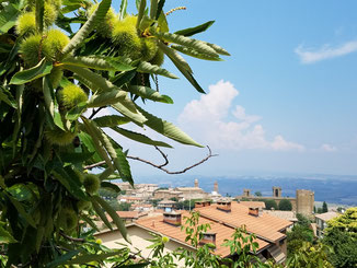 Letzter Ausblick über Montalcino