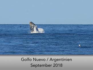 Wale Peninsula Valdes Argentinien